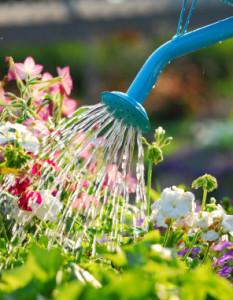 Hem och trädgård, vattna blommor